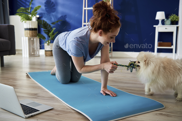 Woman playing with dog while exercising at home - Stock Photo - Images