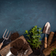 Fresh green herbs with garden tools - PhotoDune Item for Sale