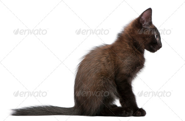 Black kitten sitting in front of white background - Stock Photo - Images