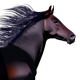 black horse  - GraphicRiver Item for Sale