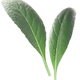 Artichoke leaves c. cardunculus, paths - PhotoDune Item for Sale