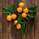 Fresh medlars - PhotoDune Item for Sale