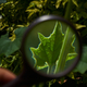 Looking at a little green leaf through a magnifying glass - PhotoDune Item for Sale