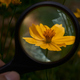 Looking at a little yellow flower through a magnifying glass - PhotoDune Item for Sale