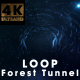 Forest Tunnel - VideoHive Item for Sale