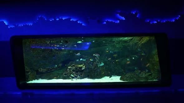 VideoHive Fish In Oceanarium 20402420