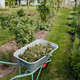 Wheelbarrow full of branches - PhotoDune Item for Sale