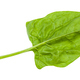 gren leaf of spinach herb isolated on white - PhotoDune Item for Sale