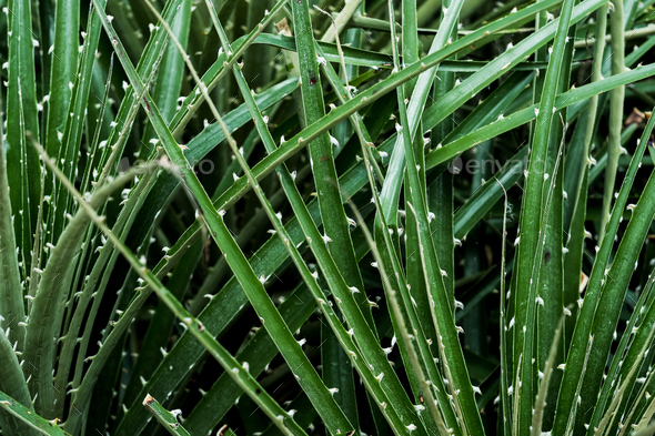 Close up of spiky green leaf blades. - Stock Photo - Images