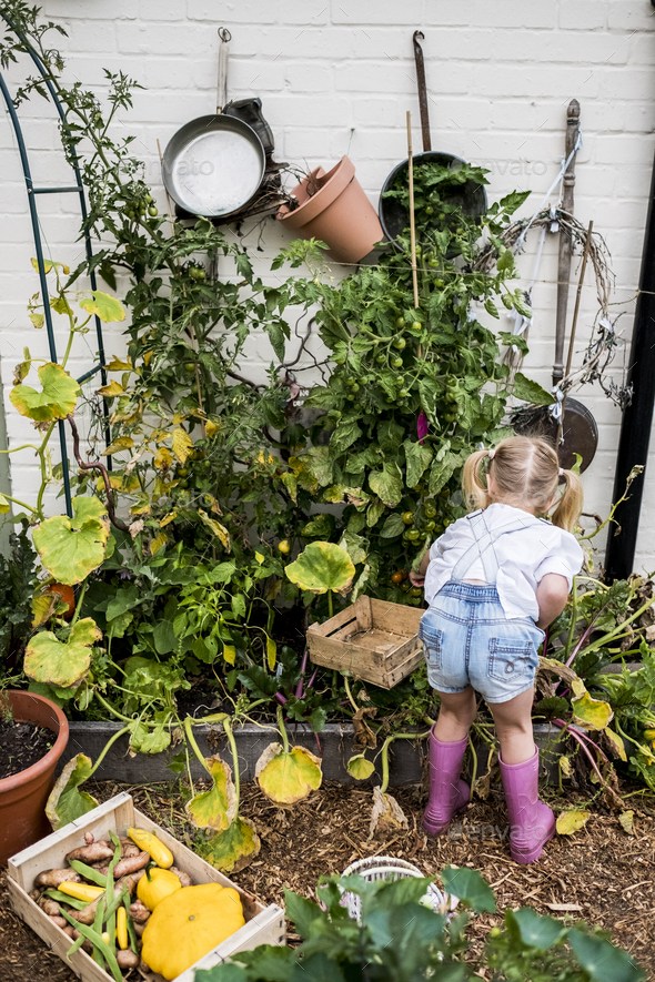 Rear view of blond girl standing in a garden, picking fresh vegetables. - Stock Photo - Images