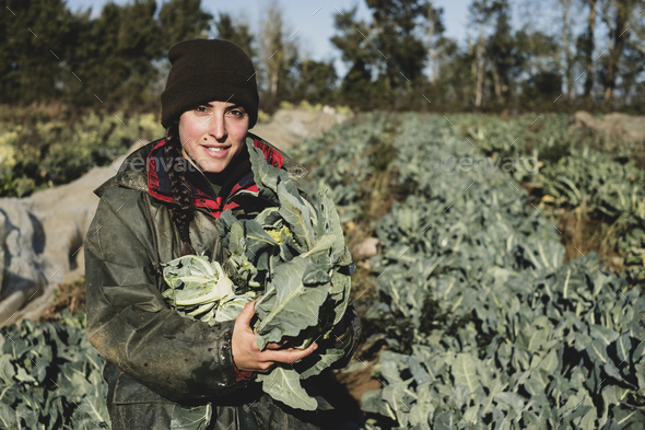 Smiling woman standing in field, holding blue crate with freshly harvested cauliflowers, looking at - Stock Photo - Images