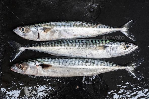 High angle close up of three fresh mackerel fish. - Stock Photo - Images