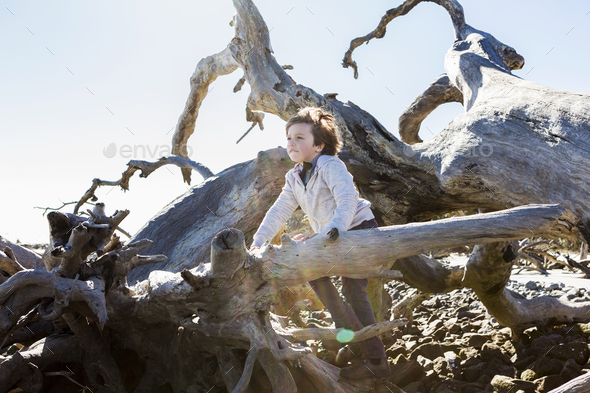 6 year old boy climbing on massive trees lying in ocean water, Driftwood Beach, Jekyll Island, - Stock Photo - Images