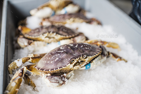 Group of fresh caught crab shellfish on ice at a fish market. - Stock Photo - Images