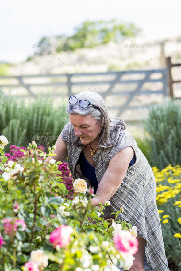 senior grandmother and her 5 year old grandson pruning roses in her garden - Stock Photo - Images