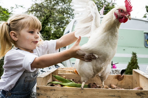 Close up of blond girl holding white chicken flapping it's wings. - Stock Photo - Images