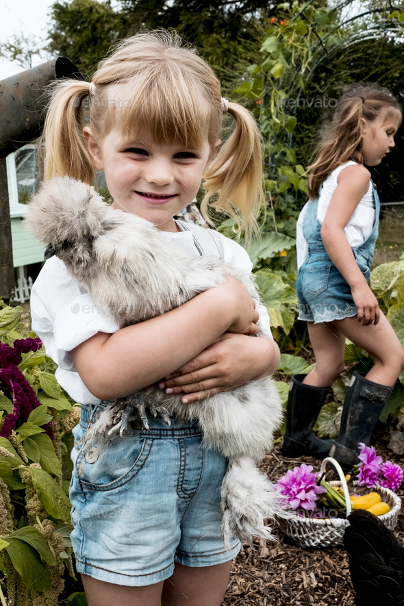 Blond girl standing in a garden, holding fluffy grey chicken. - Stock Photo - Images