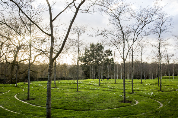 A garden in winter, young trees in grass with paths cut through the grass. - Stock Photo - Images