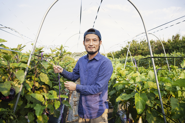 Smiling Japanese man wearing cap standing in vegetable field, looking at camera. - Stock Photo - Images