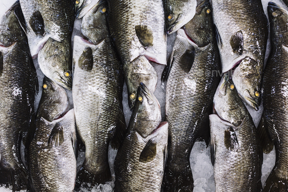 High angle close up of barramundi on ice ready to be cut into portions. - Stock Photo - Images