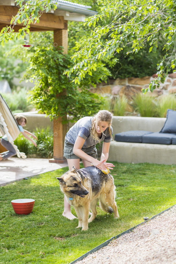 13 year old girl washing her dog on green lawn - Stock Photo - Images
