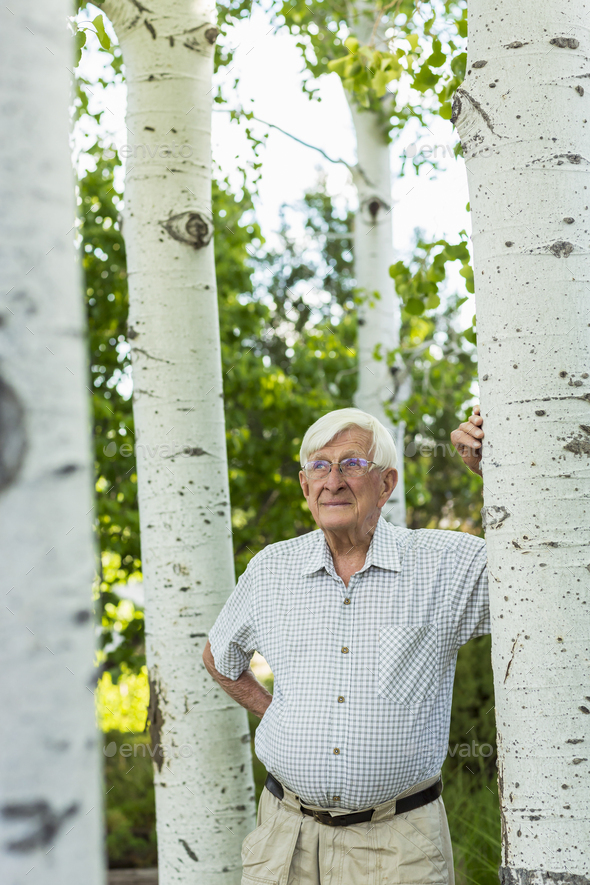 senior man looking up at aspen trees - Stock Photo - Images