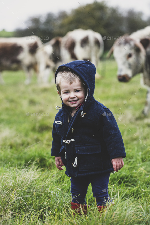 Young boy standing on a pasture, with English Longhorn cows in the background. - Stock Photo - Images