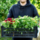 Man is shopping petunia flowers in garden center carrying basket. - PhotoDune Item for Sale