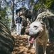 Man with dog in the middle rock formations - PhotoDune Item for Sale