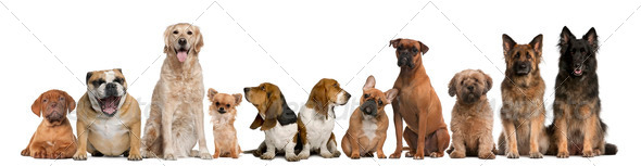 Group of dogs sitting against white background - Stock Photo - Images