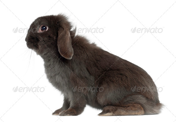 Rabbit sitting against white background - Stock Photo - Images