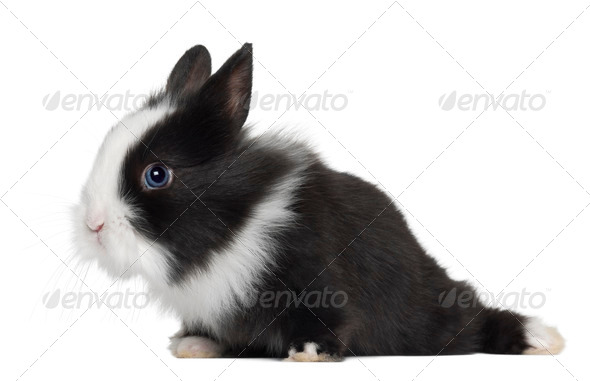 Rabbit, 6 months old, against white background - Stock Photo - Images