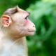 Monkey at Sanjay Gandhi National Park - PhotoDune Item for Sale