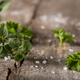 Thyme and curly parsley - PhotoDune Item for Sale