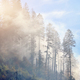 Spruce forest with dense fog and sunrays at the dawn. Autumn morning in the mountains. - PhotoDune Item for Sale