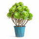 potted green succulent plant isolated - PhotoDune Item for Sale