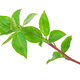 Young green sprout of apple-tree with leaf - PhotoDune Item for Sale