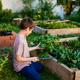 Boy working in a garden - PhotoDune Item for Sale