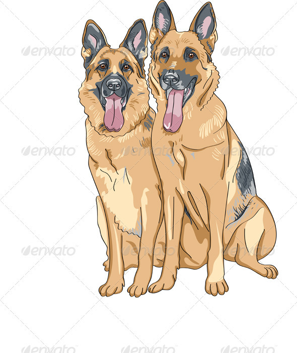 Two Dog German Shepherd Breed - Animals Characters