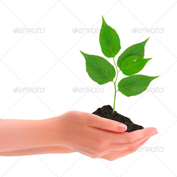 Hands holding young plant. Vector  - Flowers & Plants Nature
