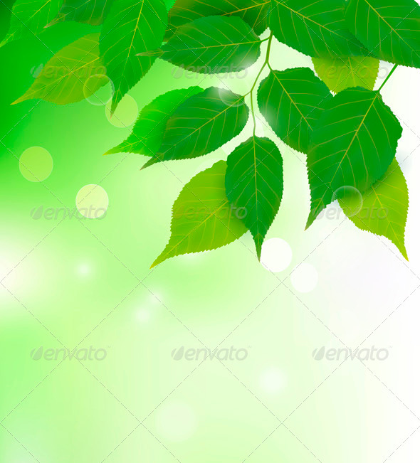 Nature background with fresh green leaves  Vector  - Flowers & Plants Nature