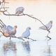 Little Corellas at a Drinking Spot - PhotoDune Item for Sale