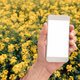 Agronomist with smartphone mock up screen in oilseed rape field - PhotoDune Item for Sale