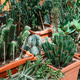 Different kinds of cacti in a greenhouse. - PhotoDune Item for Sale