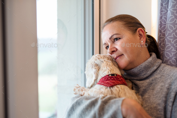 Portrait of senior woman sitting by window indoors at home, holding dog - Stock Photo - Images
