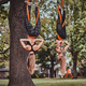Couple of young active womans is doing exercises upside down - PhotoDune Item for Sale
