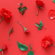 Red Roses on red background top view - PhotoDune Item for Sale