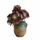 beautiful potted succulent plant - PhotoDune Item for Sale