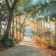 Goa, India. Country Road Through An Indian Village. Morning Dawn Haze Enveloped Palm Trees - PhotoDune Item for Sale