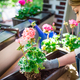 Woman planting flower on balcony at sunny spring day, home gardening - PhotoDune Item for Sale